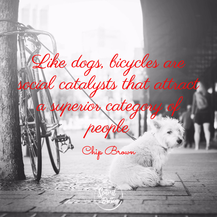 Like dogs bicycles are social catalysts that attract a superior category of people