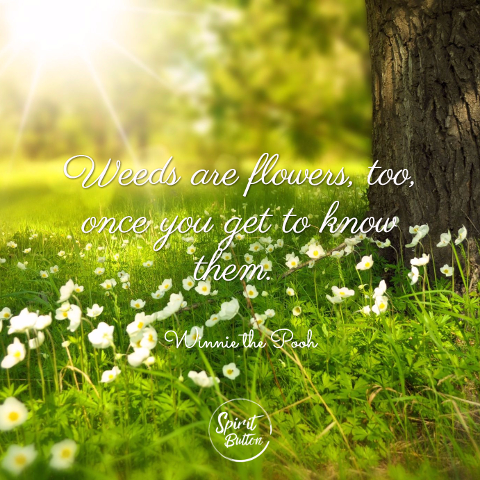 Weeds are flowers too once you get to know them